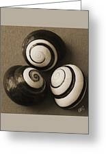 Seashells Spectacular No 28 Greeting Card by Ben and Raisa Gertsberg