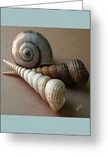 Seashells Spectacular No 29  Greeting Card by Ben and Raisa Gertsberg