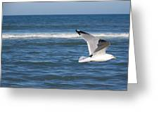 Seashore Soaring Greeting Card