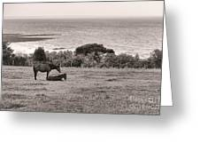 Seaside Horses Greeting Card by Olivier Le Queinec