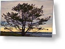 Seaside Pine Greeting Card