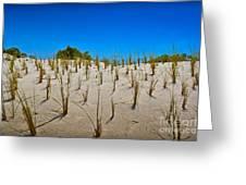 Seaside Sand Dunes Greeting Card