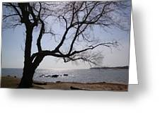 Seaside Tree In Connecticut Long Island Sound Greeting Card