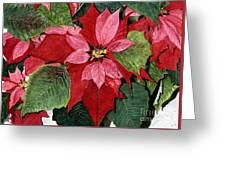 Seasonal Scarlet Greeting Card