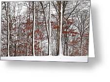 Seasons Converge Greeting Card