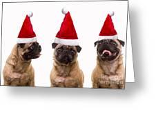 Seasons Greetings Christmas Caroling Pug Dogs Wearing Santa Claus Hats Greeting Card