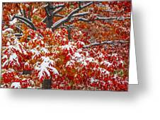 Seasons Of Change Greeting Card