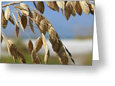 Seat Oats Greeting Card