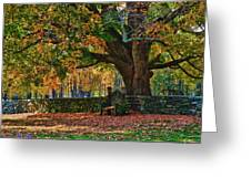 Seated Under The Fall Colors Greeting Card