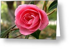 Seattle Rose Greeting Card