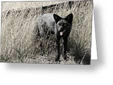 Seattle Silver Fox Greeting Card