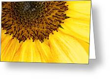 Seattle Sunflower Close-up Greeting Card