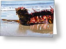 Seaweed 2 Greeting Card
