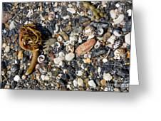 Seaweed And Shells Greeting Card
