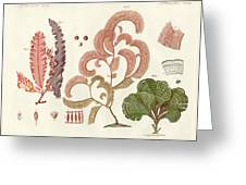 Seaweed Different Kinds Greeting Card