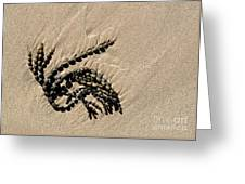 Seaweed On Beach Greeting Card