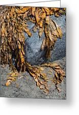 Seaweed On The Rock Greeting Card