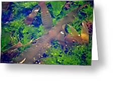 Seaweed Variety Greeting Card