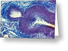 Sebaceous Gland, Light Micrograph Greeting Card