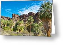 Second Largest Stand Of Fan Palms In The World In Andreas Canyon In Indian Canyons-ca Greeting Card