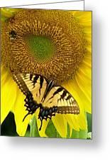 Secret Lives Of Sunflowers Greeting Card