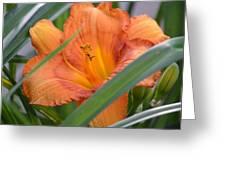 Secret Sunset - Lily Greeting Card