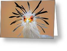 Secretary Bird Portrait Close-up Head Shot Greeting Card by Johan Swanepoel