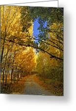 Autumn Secrets Greeting Card