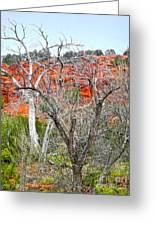 Sedona Arizona Dead Tree Greeting Card