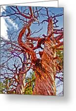 Sedona Arizona Ghost Tree Greeting Card