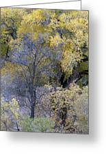 Sedona Fall Color Greeting Card
