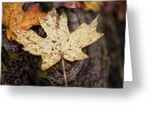 Sedona Leaf 12 Greeting Card