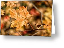 Sedona Leaf 14 Greeting Card