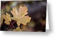 Sedona Leaf 19 Greeting Card