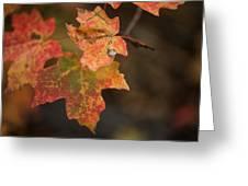 Sedona Leaf 25 Greeting Card