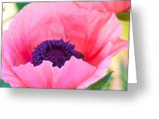 Seductive Poppy Greeting Card