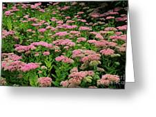Sedum Garden Greeting Card