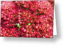 Sedums Upclose Filtered Greeting Card