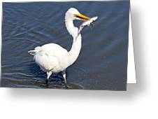 See My Catch Greeting Card