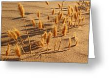 Seed And Sand Greeting Card