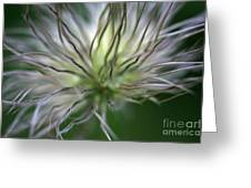 Seed Head Greeting Card