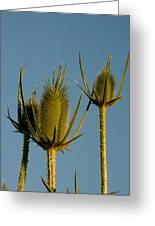 Seed Heads Reach For The Sky Greeting Card