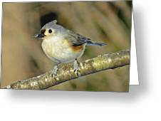 Seed On Tufted Titmouse Greeting Card
