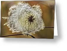 Seed Pod Greeting Card