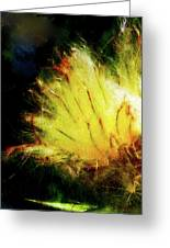 Seedburst Greeting Card