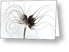 Seeds Greeting Card by Anne Gilbert