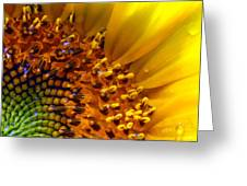 Seeds Of Sunshine Greeting Card