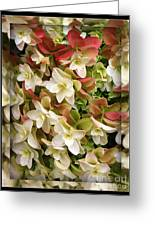 Seeing Double - Hydrangeas Greeting Card