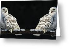 Seeing Double- Snowy Owl At Twilight Greeting Card