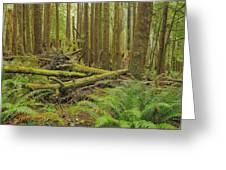 Seeing Forest Through The Trees Greeting Card